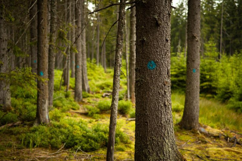 Modrá, nikoli zelená Šumava.