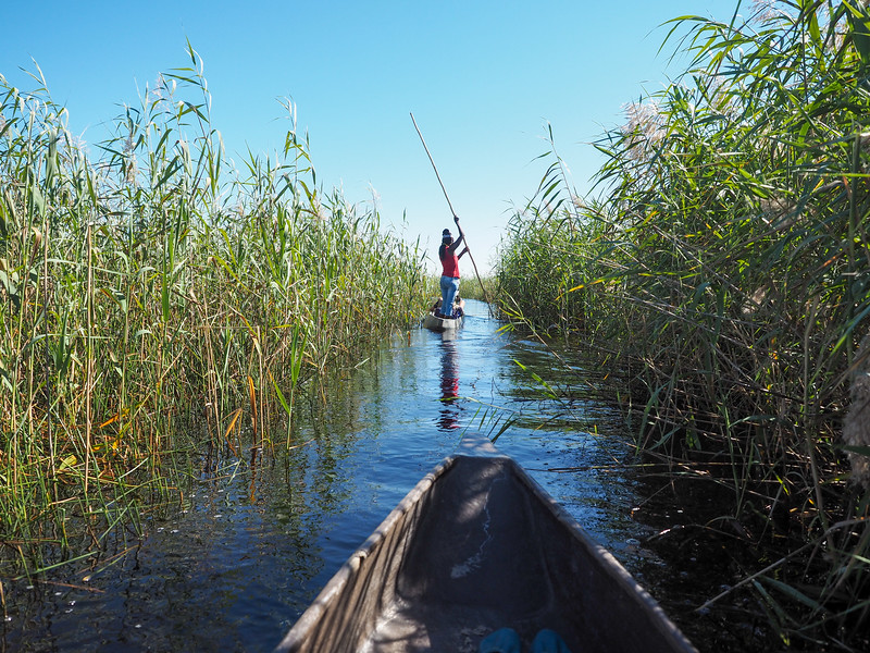 Mokoro ride in the Okavango Delta