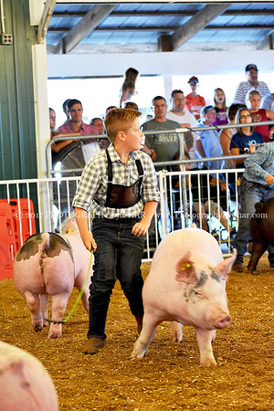 Swine Showmanship 8-8-2017