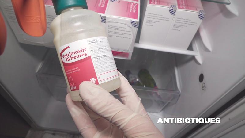antibiotique-1_50426539627_o.png