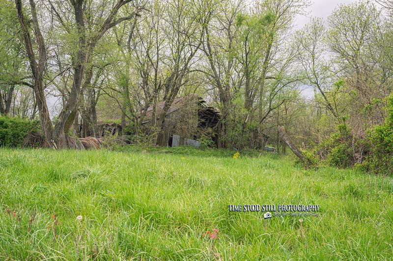 KC Landscape-45.jpg