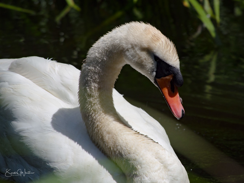 020716_London Wetlands_073.jpg