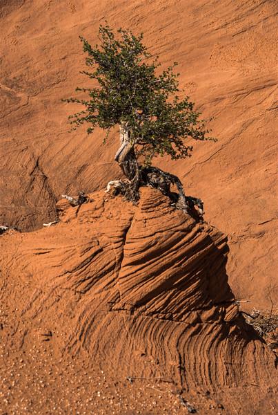 DSC_0120 Hole In The Rock Road Lone Tree PS- LL +++++ tNEF.jpg