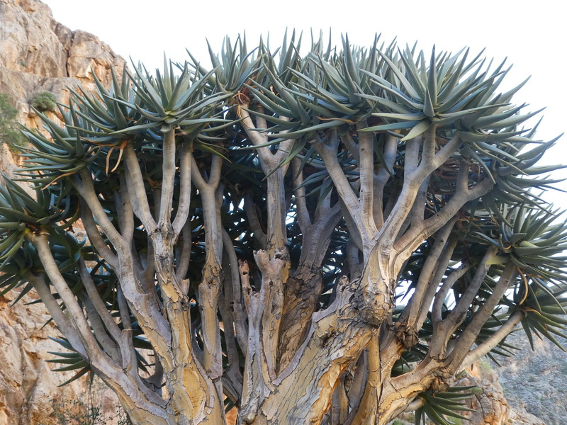 Namibia Lumix  (123).JPG