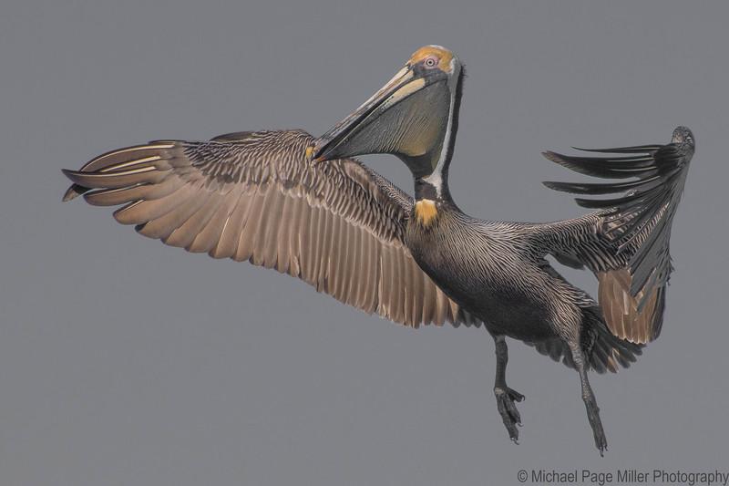 Florida Birds 29-03-17_1876.jpg