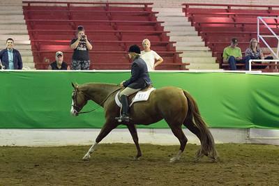 58  - Hunt Seat Pleasure Senior Horse