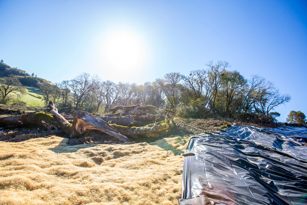 . Tarp and straw cover used for erosion control.Photo by Steve Eberhard.