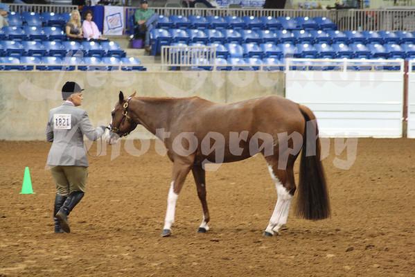 2010.06.10 - World Pinto Horse Show
