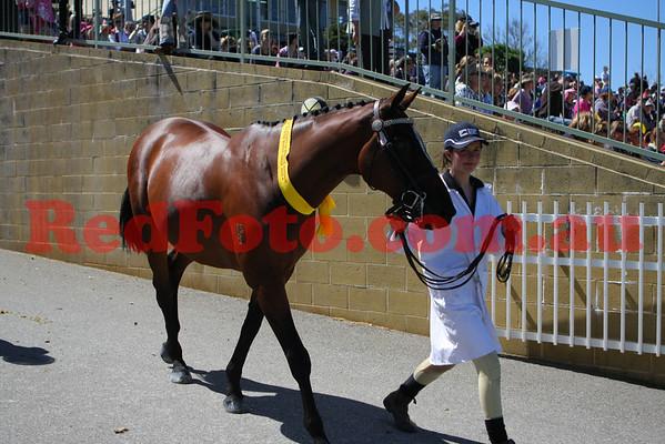 2009 09 26 Perth Royal Show Grand Parade