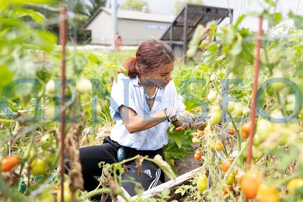 E-Garden Harvest (Jess Rivera '22 and Lauren Goulet '23)