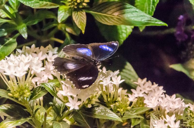 Butterflies at NMNH-15.jpg
