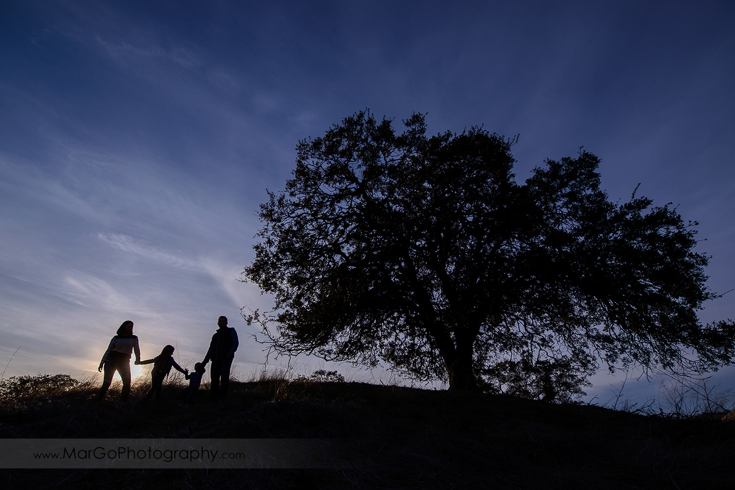little people silhouette of family of four holding hands and standing under big tree during photo session at Diablo Foothills Regional Park in Walnut Creek