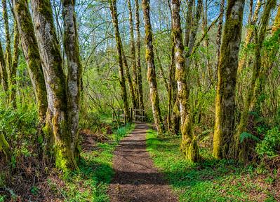 Lower Redwood Creek Trail