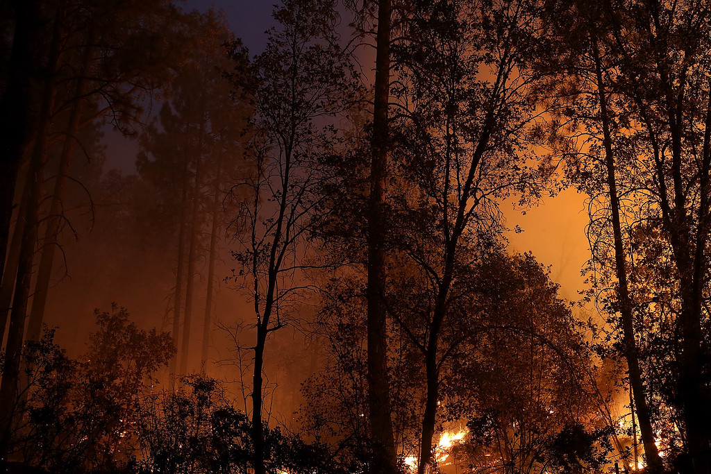 . GROVELAND, CA - AUGUST 21:  A back fire burns in trees during the Rim Fire on August 21, 2013 in Groveland, California. The Rim Fire continues to burn out of control and threatens 2,500 homes outside of Yosemite National Park. Over 400 firefighters are battling the blaze that is only 5 percent contained.  (Photo by Justin Sullivan/Getty Images)