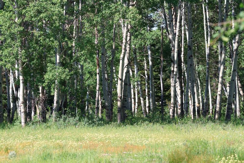 2011_07_08 Wyoming 159.jpg