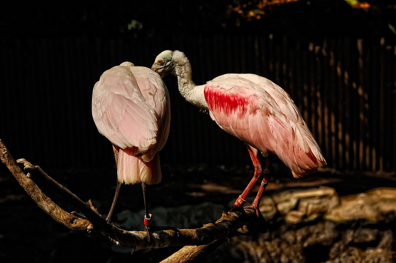 Los Angeles Zoo_6
