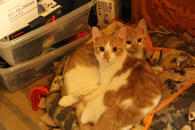 My New Cat and Kitten, My House, Tamaqua (10-19-2013)