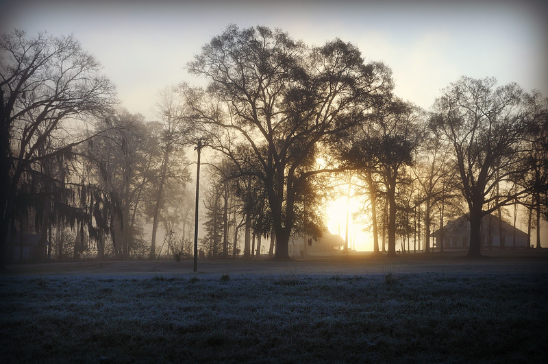 Fog and frost are a wonderful combination.