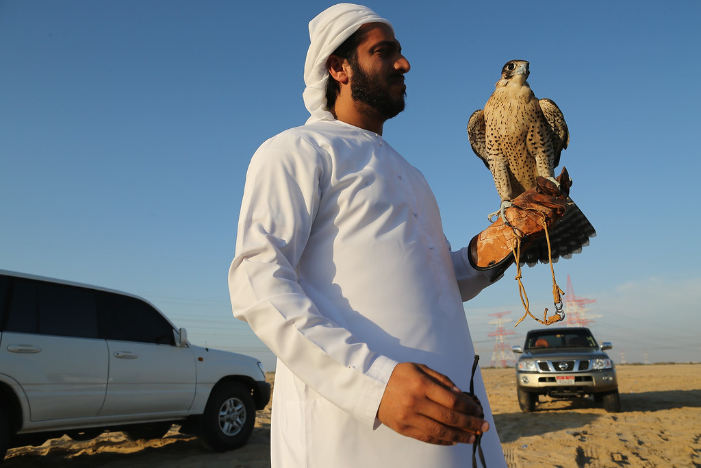 . A man holds his Falcon during an evening training session with friends on February 3, 2015 in Abu Dhabi, United Arab Emirates. (Photo by Dan Kitwood/Getty Images)