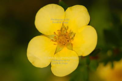 06/23/08 Flowers