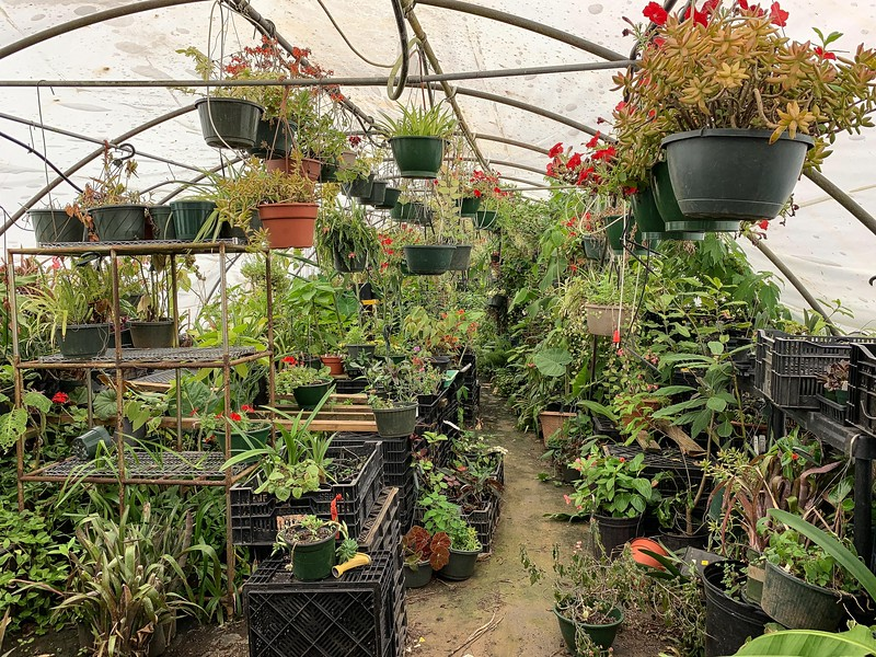 Mike's Greenhouse Nursery