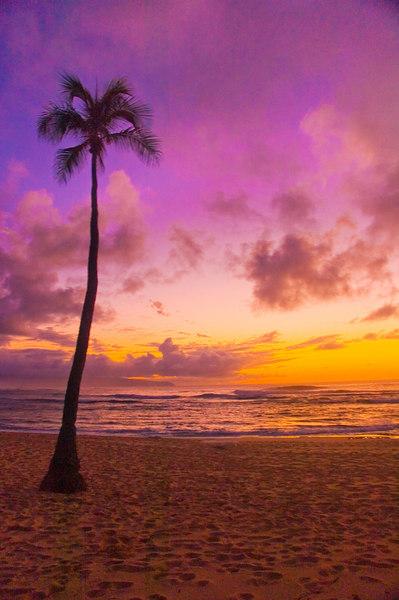 palm,sunset,SnstPt.jpg