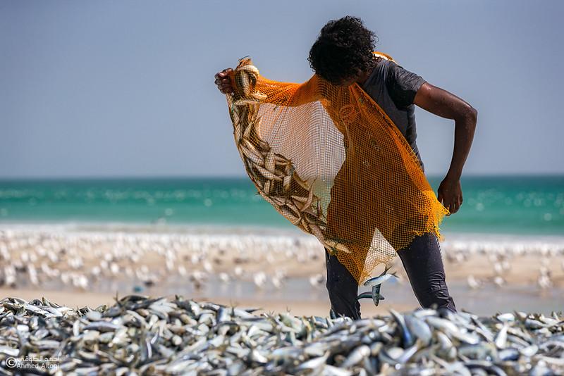 Sardine Season (21)- Dhofar.jpg