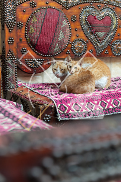 beautiful cats on a decorated arabic seat at a coffee tea bar in the Islamic Cairo