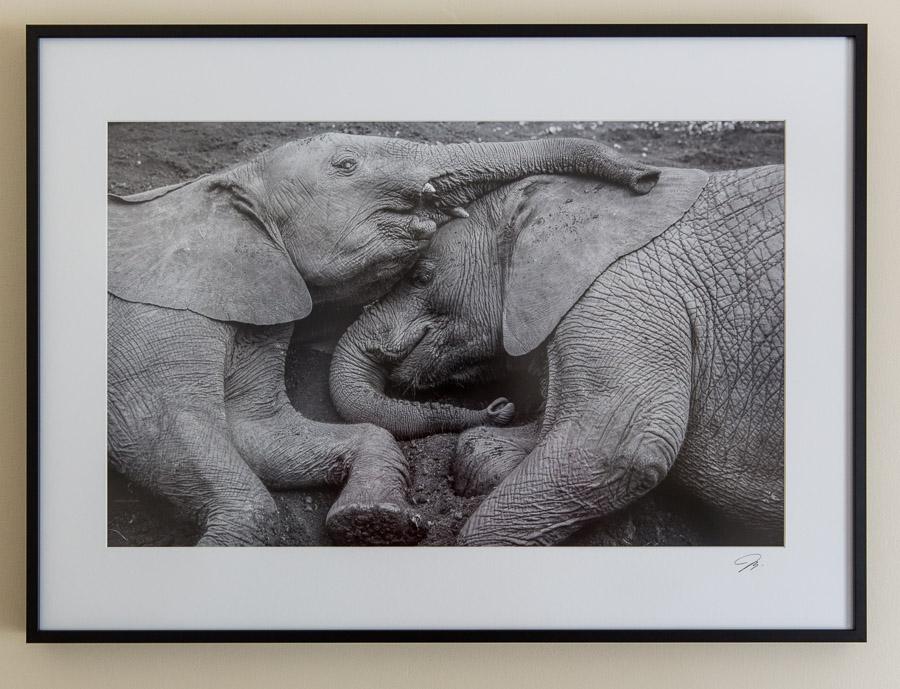 "A print framed to 22""x30"" with antiglare plexiglass."