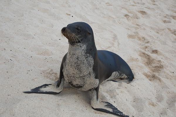 San Cristobal Island, Galapagos - May, 2017