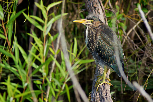 Florida Nature 2012