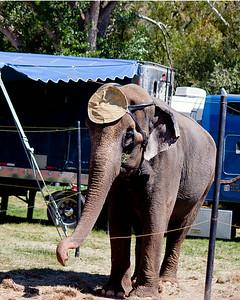 Davis County Fair 2014