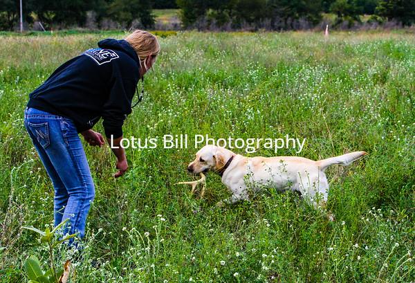 Amy 2nd Dog