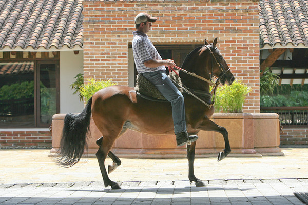 filly (Trote y Galope)