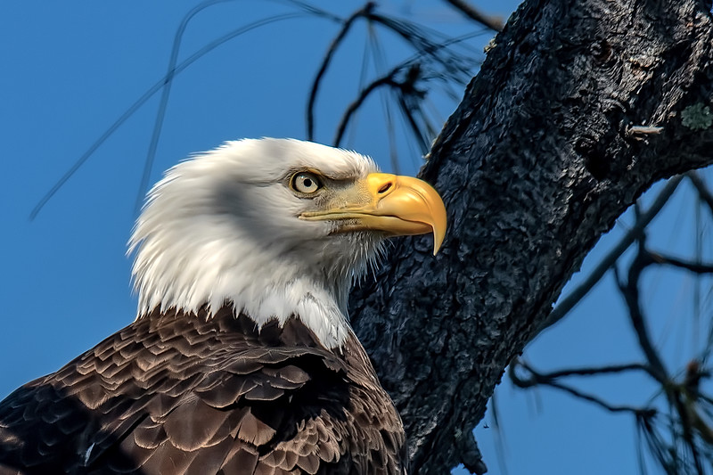 20190418Home Eagles 4-18-19DSC_8385.jpeg