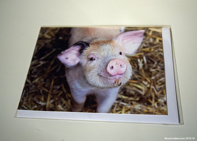 Greeting Cards - Pigs