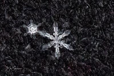 snowflakes-1278.jpg