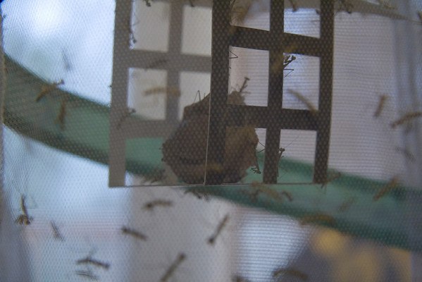 2009 March Praying Mantis