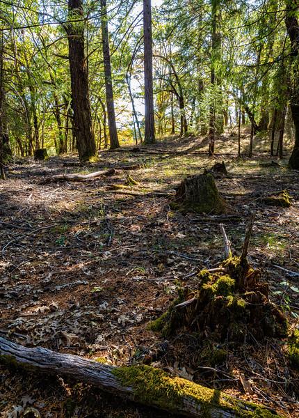Deep Woods #2