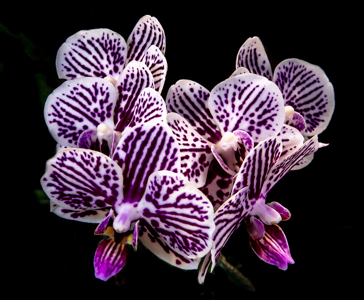 orchid 2020 (3 of 3).jpg