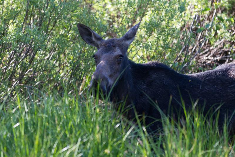 2011_07_08 Wyoming 010.jpg