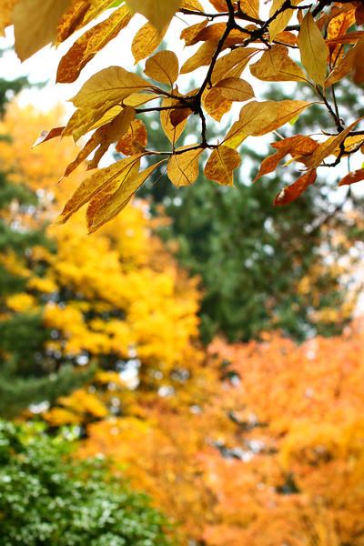 Portland Japanese Garden  11-11-11  3532.jpg