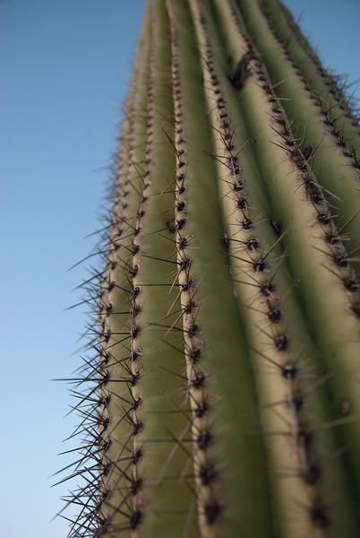 Tucson, Az - Oct 1, 2009-0020.jpg