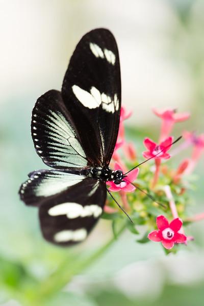 2013 Butterflies