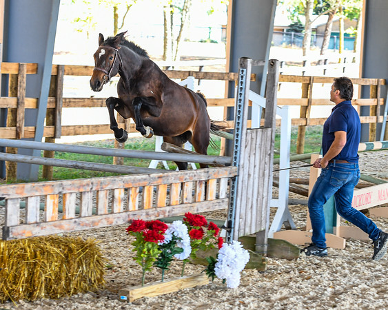 Free Jumping Clinic at Hickory Manor Farm