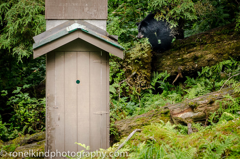 A stop by the outhouse.  Notice the bear claws gouges trying to open the door.