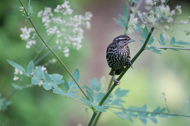 Bird_5944.jpg