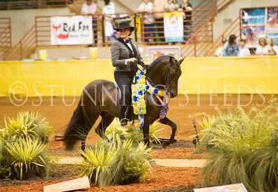 Performance Amateur Colt Stallion Championship