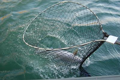Columbia River Fishing
