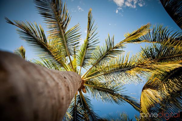 Hawaii 6-08 recap